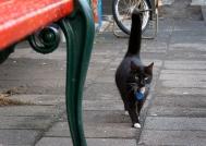 Icelandic Street Cat